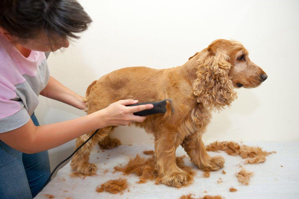 Resultado de imagen para peluqueria veterinaria sena